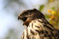 Avistamientos Aves Rapaces