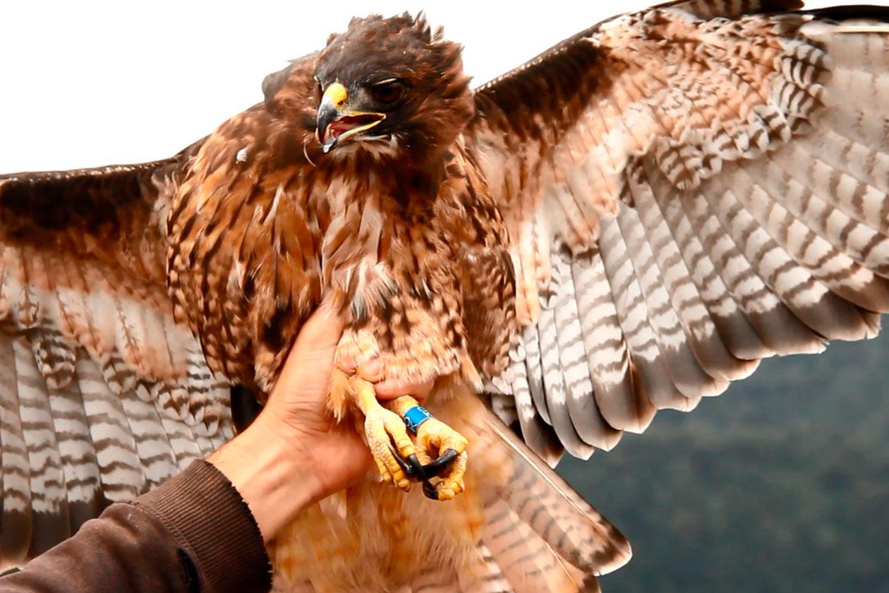 Denuncias Aves Rapaces en peligro